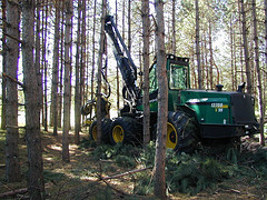 Cut to length harvester in red pine