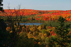 Fall color from Oberg Mtn. Allison Eklund photo.