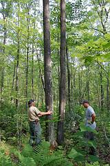 Forester and landowner