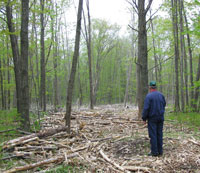 Recent family forest harvest site